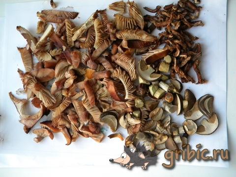 Грибы в акварели оранжевый гриб на